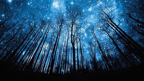 Starry Night Sky with Tree