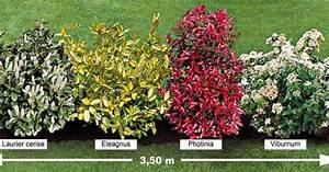 Arbuste Persistant Haie : la haie persistante 4 arbustes for the home ~ Premium-room.com Idées de Décoration