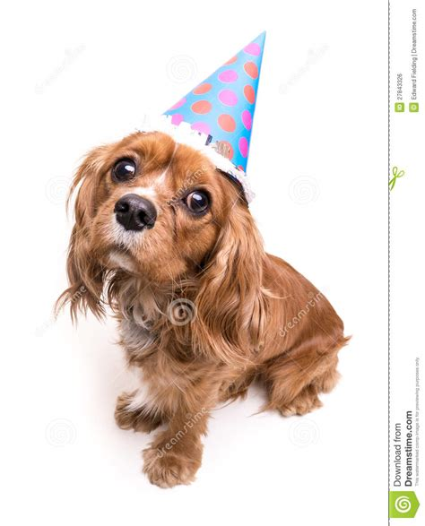 happy birthday puppy royalty  stock image image