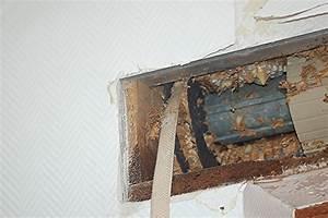 Was Tun Gegen Wespen Im Kirschlorbeer : wespennest im rolladenkasten was tun ~ Lizthompson.info Haus und Dekorationen
