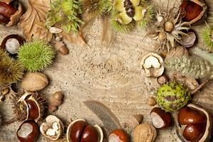 Herbst Dekoration Fenster : dekorieren im herbst mit materialien aus der natur ~ Watch28wear.com Haus und Dekorationen