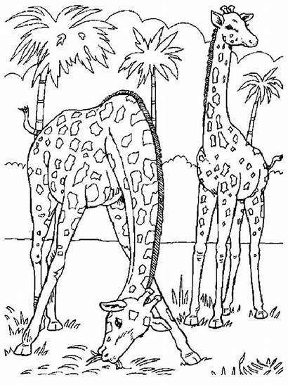 Coloring Pages Realistic Animal Printable Animals Jungle