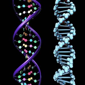 Pics For > Dna Structure 3d Model