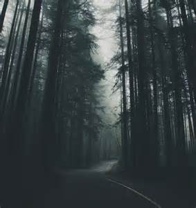 Dark Forest Nature Photography Tumblr