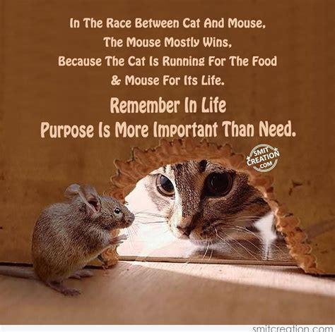 race  cat  mouse smitcreationcom