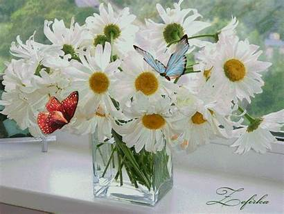 Animated Flower Daisies Butterflies Gifs Flowers Butterfly