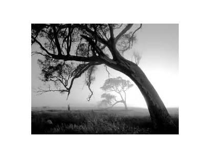 Nature Tree Photographer Monochrome Photographers Professional Trees