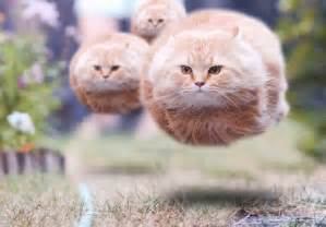 flying cats flying cat