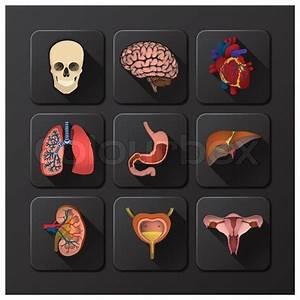 Internal Organs Medical And Health