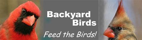 index www feedbackyardbirds com