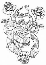 Coloring Snakes Cool Snake Adult Roses Popular sketch template