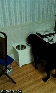Cat Eating GIF by Cheezburger - Find & Share on GIPHY