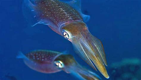 squid  prawn cocktail   st century