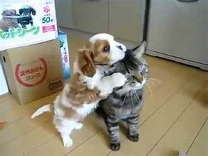 Cats And Dogs Kissing | www.pixshark.com - Images ...