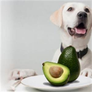 list foods dogs can cant eat