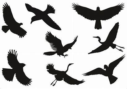 Flying Bird Silhouette Flight Clipart Birds Clip