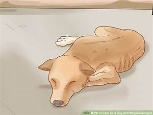3 Ways To Care For A Dog With Megaesophagus
