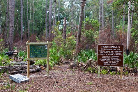 Hammock Trails by Foster S Hammock Loop Trail Nrt Database