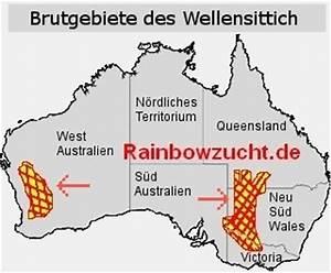 Alles über Wellensittiche : rainbow wellensittich ~ Yasmunasinghe.com Haus und Dekorationen