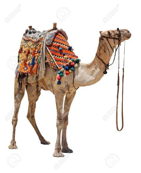 pin  missy halvas  dromedary saddle camel camels