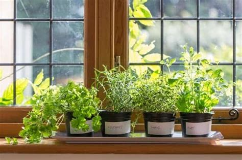 windowsill herb garden apartmentguide pots protect shine sure put something under plant sun let