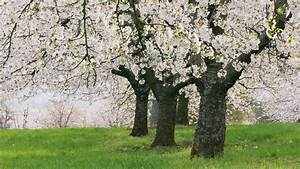 Beautiful, Tree, With, White, Leaf, Image