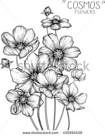 cosmos flowers clip art  illustration painting