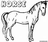 Horse Coloring Pages Colouring sketch template
