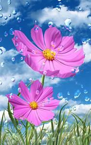 Pics For > Raindrop On Flower Wallpaper Hd