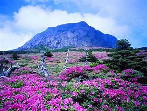 The Wanderer: Jeju