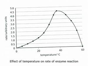 Enzymes And Reactions