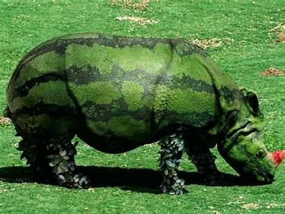 Funny Wallpapers Creative Animal Animals Animation Rhino