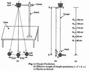 Using A Simple Pendulum  Plot Its L
