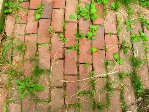Keep Weeds Out Of Garden by How Keep Weeds Out Of Your Garden Vegetable Patch Diy