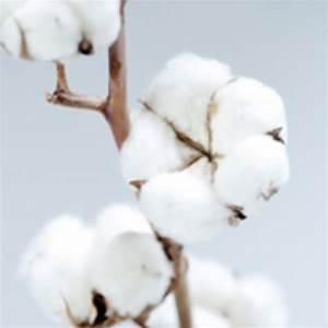 Bouquet Fleur De Coton : durance eau de toilette fiore di cotone forme e colori ~ Teatrodelosmanantiales.com Idées de Décoration