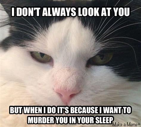 To Kill A Mockingbird Cat Meme - to kill a mockingbird cat meme 100 images shelby funny photos to kill a mockingbird photos