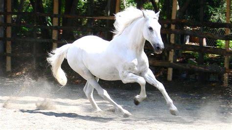 horses horse baby desktop backgrounds