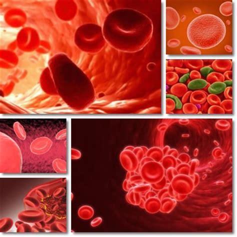 i 10 alimenti più ricchi di ferro combattere l anemia con gli alimenti ricchi di ferro