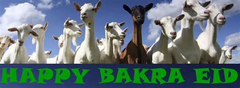 funniest happy bakra eid funny pictures funnyexpo