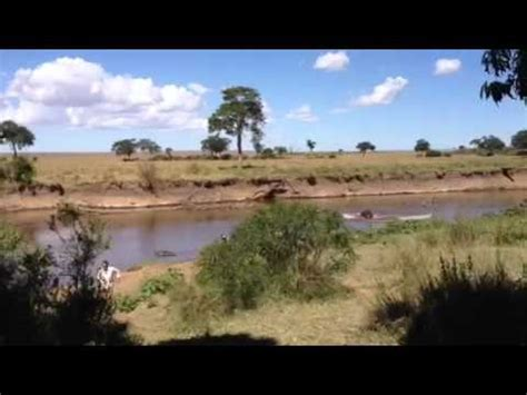 Hippo Chases Boat Underwater by Hippo Charge Doovi