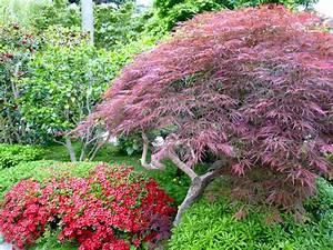 Plante Pour Jardin Japonais : fleur pour jardin japonais l 39 univers du jardin ~ Dode.kayakingforconservation.com Idées de Décoration