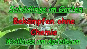 Schädlinge Im Garten : woll use behandeln ohne chemie sch dlinge im garten duo ~ A.2002-acura-tl-radio.info Haus und Dekorationen