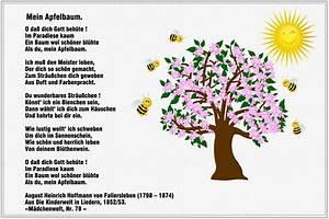 Mein Apfelbaum Anleitung : wie pflanze ich einen apfelbaum wie schneide ich einen ~ Lizthompson.info Haus und Dekorationen