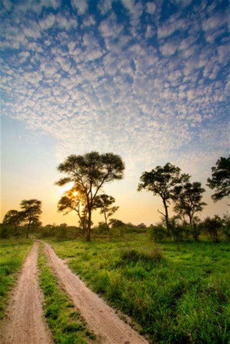 flora  fauna south africa