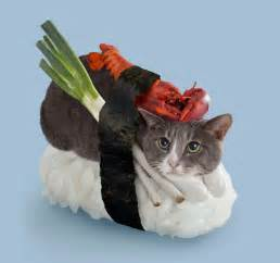 sushi cats sushi cats a collection of magical felines resting