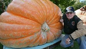 Growers, Compete, For, Bragging, Rights, With, Giant, Pumpkins