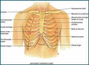Nurs 150 Study Guide  2011-12 Rosselli