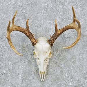 Deer Skull Front | www.imgkid.com - The Image Kid Has It!