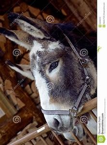 Mule stock image. Image of animal, head, mule, nature ...