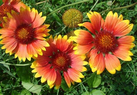 flowers to plant in for summer bloom beautiful summer blooming flowers to plant in your backyard